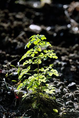 植物の発芽