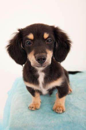 cute dog: Chic Stock Photo