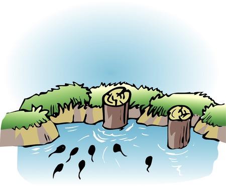 creek: Spring Brook
