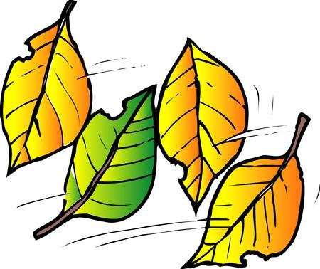 fallen: Fallen leaves