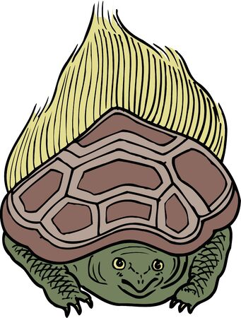 carapace: Turtle