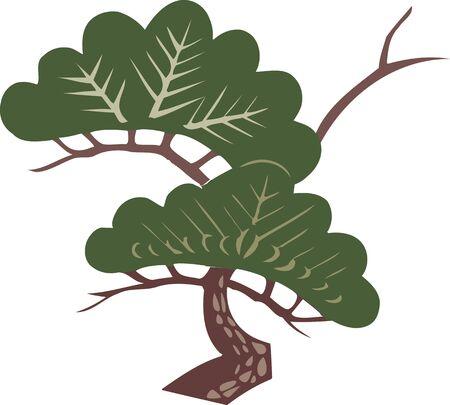 conifers: Pine Stock Photo