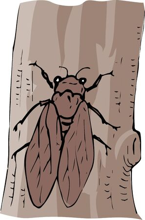 cicada bug: Semi Stock Photo