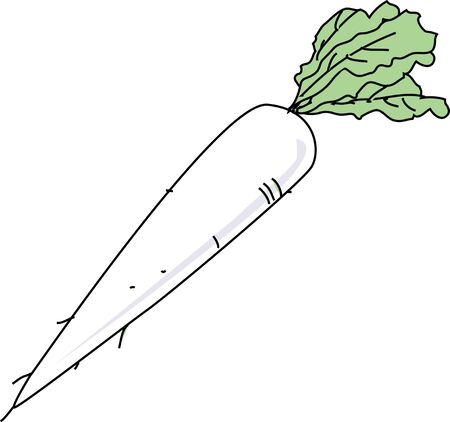 vegatables: Daikon radish Stock Photo