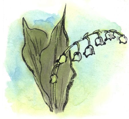 ink and wash: Lily of the Valley