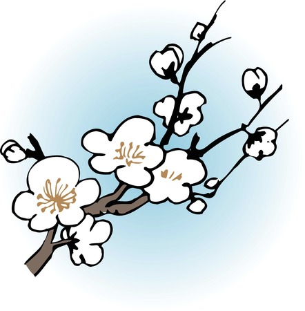 plum: White plum