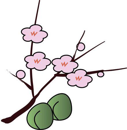 japanese apricot: Green plum