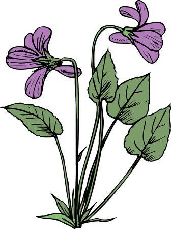 violet: Violet