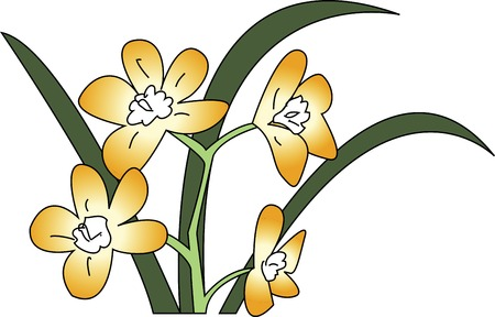 narcissus: Narcissus Stock Photo