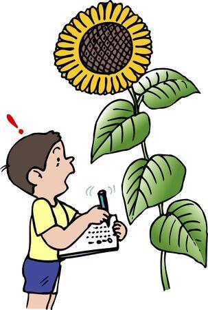 observation: Observation of the sunflower