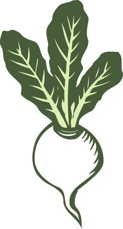 provisions: Turnip Stock Photo