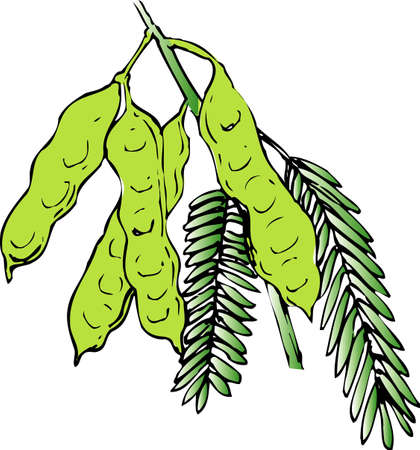 silk: Silk tree