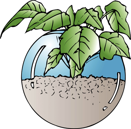 hydroponics: Hydroponics