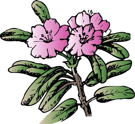 computerize: Rhododendron