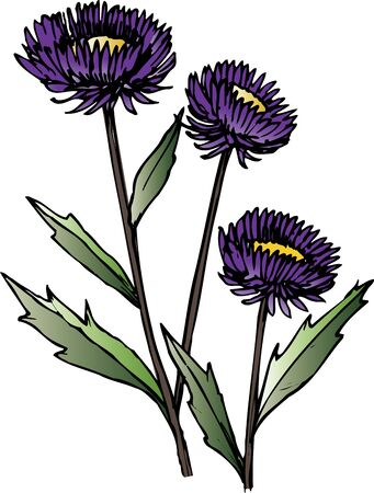 aster: China aster