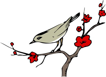 rossignol: The nightingale in the plum