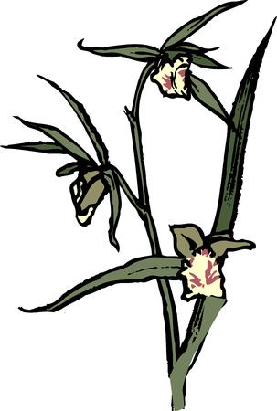 olivine: Olivine
