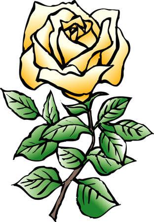 rose: Rose