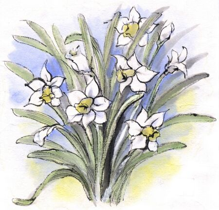 ink and wash: Narcissus Stock Photo