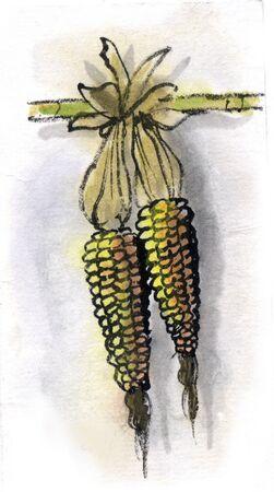 사탕 수수