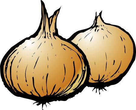 summer diet: Onion