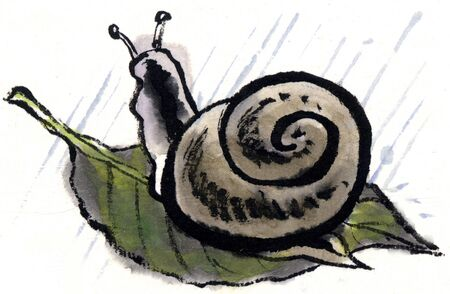 wash painting: Snail