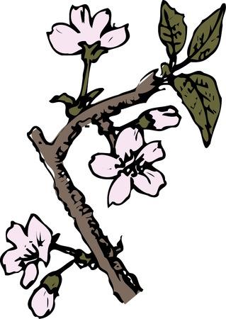 drooping: Weeping cherry tree