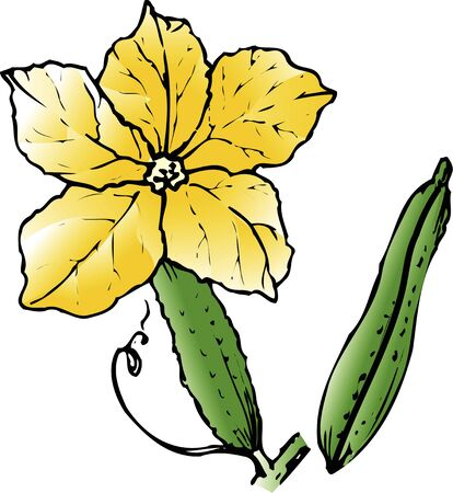 cucumber: Cucumber flower Stock Photo
