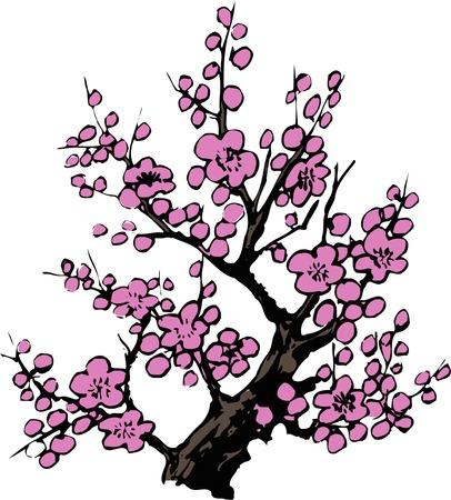 apricot tree: Red Plum