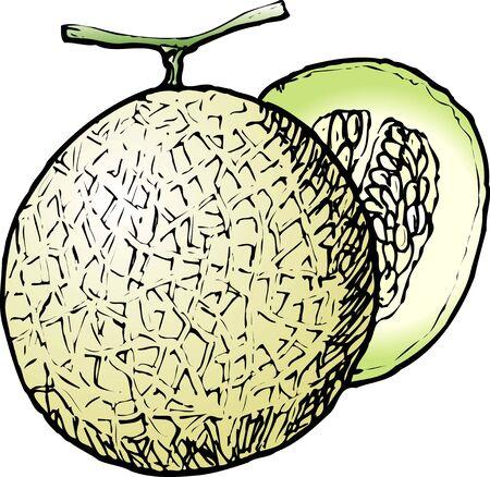 provisions: Cantaloupe