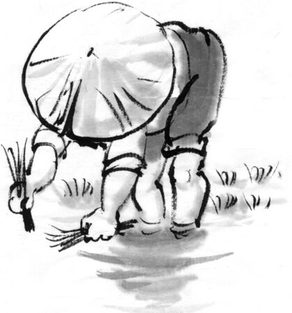 planting: Rice planting