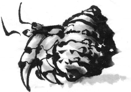sumi: Hermit crab
