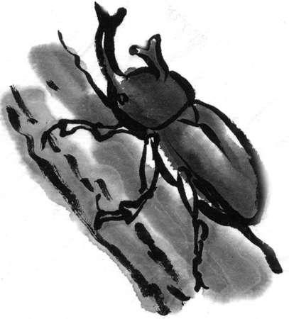 living organism: Beetle Stock Photo