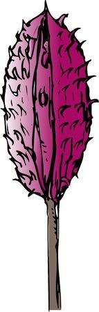 magnolia: Magnolia obovata