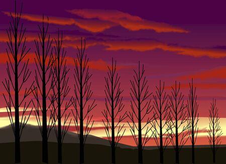 nightfall: Poplar tree-lined evening