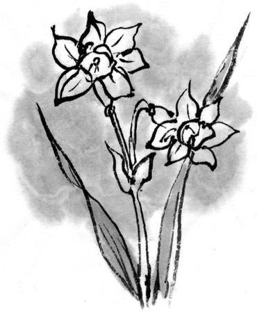 vain: Narcissus Stock Photo