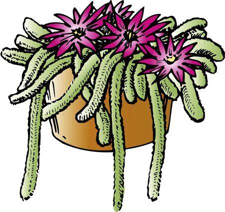 pimp: Pimp cactus