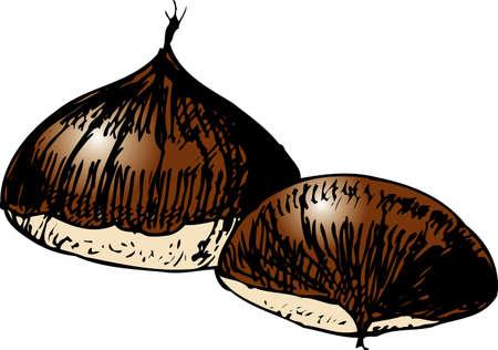 chestnut: Chestnut