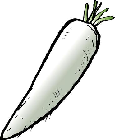 vegatables: Radish Stock Photo