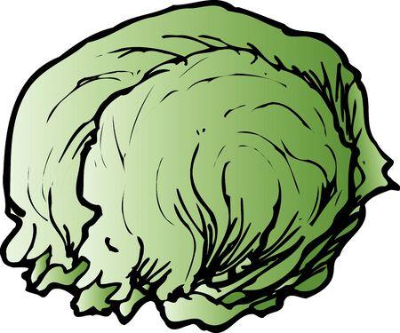 provisions: Lettuce