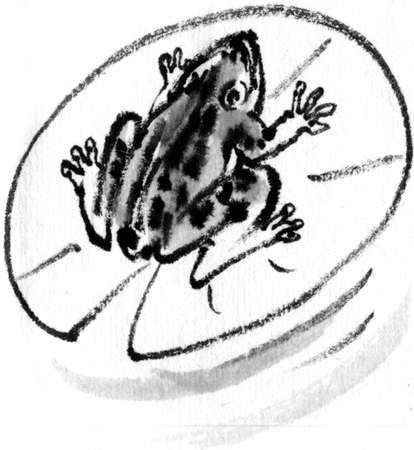 early summer: Frog Stock Photo