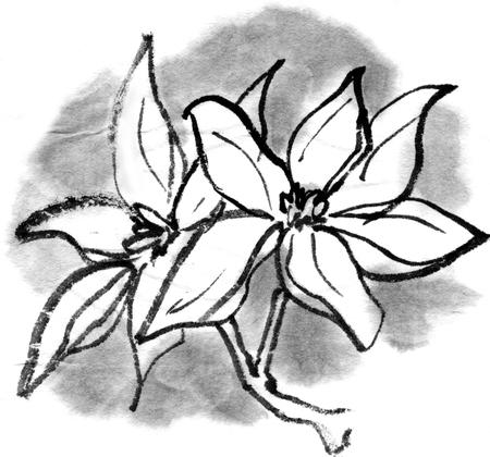 sumi: Kobushi Magnolia Stock Photo