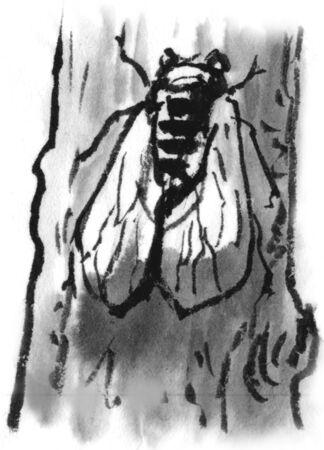 cicada: Semi Stock Photo