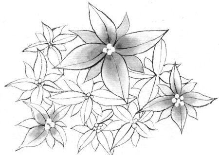 ink and wash: Flowers Stock Photo