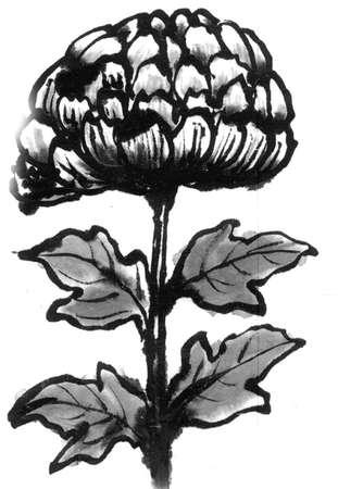 ink and wash: Chrysanthemum