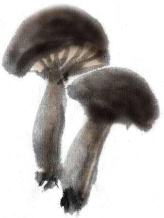 wash painting: Shiitake mushroom Stock Photo