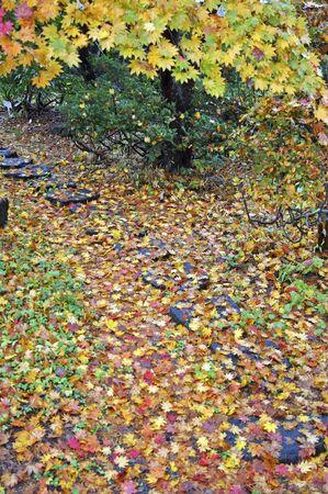 nishinomiya: Eggplant Kakunodate-maple color of late autumn
