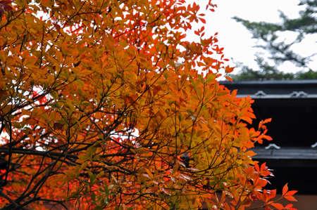 nishinomiya: Late autumn of Kakunodate-Tamachi samurai residences Nishinomiya house Stock Photo