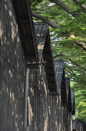 early summer: Early summer Sakata and Sankyo Soko and zelkova trees Stock Photo