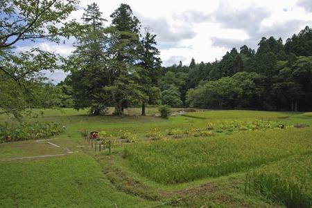prefecture: Iwate Prefecture Hiraizumi-Chusonji Oike trace